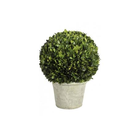 Buis Boule Dans un Pot 21Cm Vert 30X41Cm