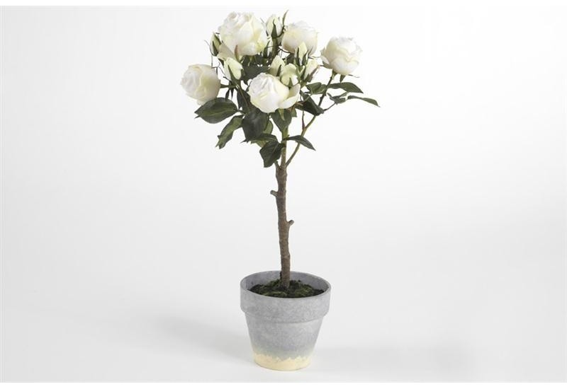 Pot Roses Blanches